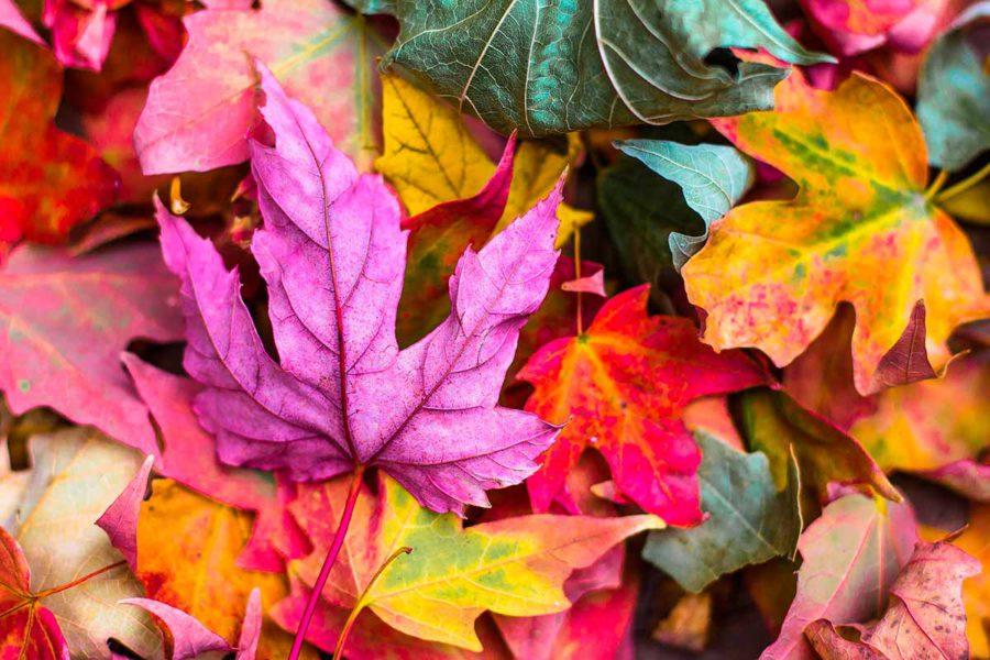 Ha llegado el otoño - El Gato Limpieza